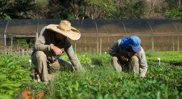 Ecosia Tree Planting Brazil