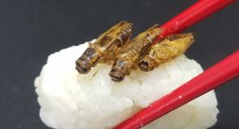 Edible insects on top of sushi rice