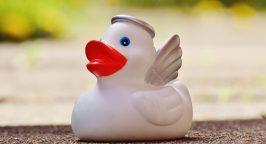 Angel duck