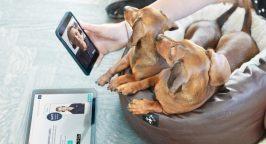 FirstVet pet having a consultation