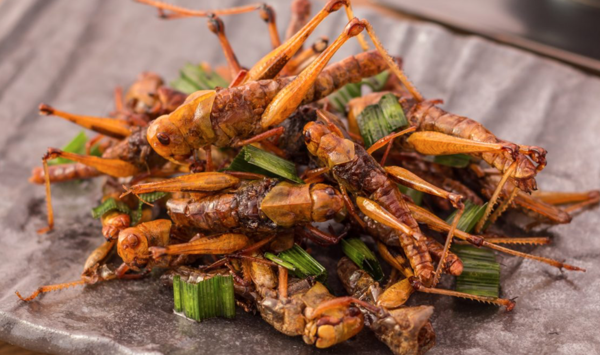Picture of edible insects with seasoning