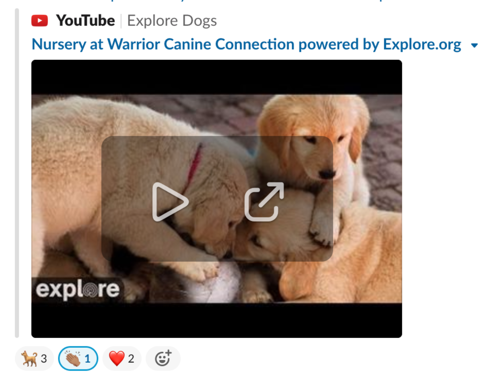 Photo of three puppies on a slack channel