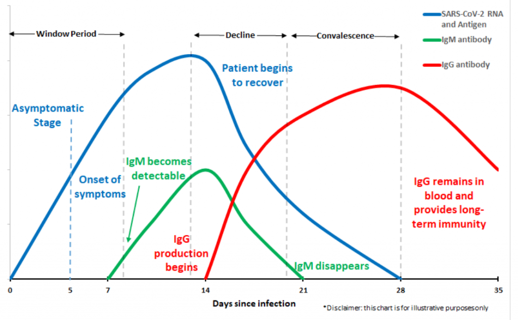 Chart showing when antibodies appear in human blood