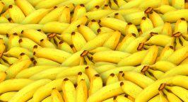 Tropic Biosciences banana