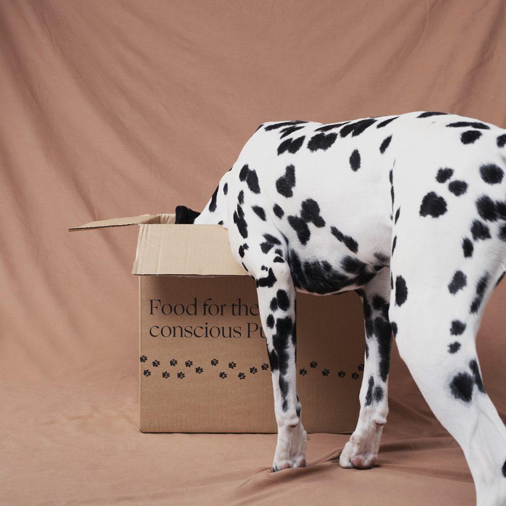 Dog eating Alvar Pet pet food
