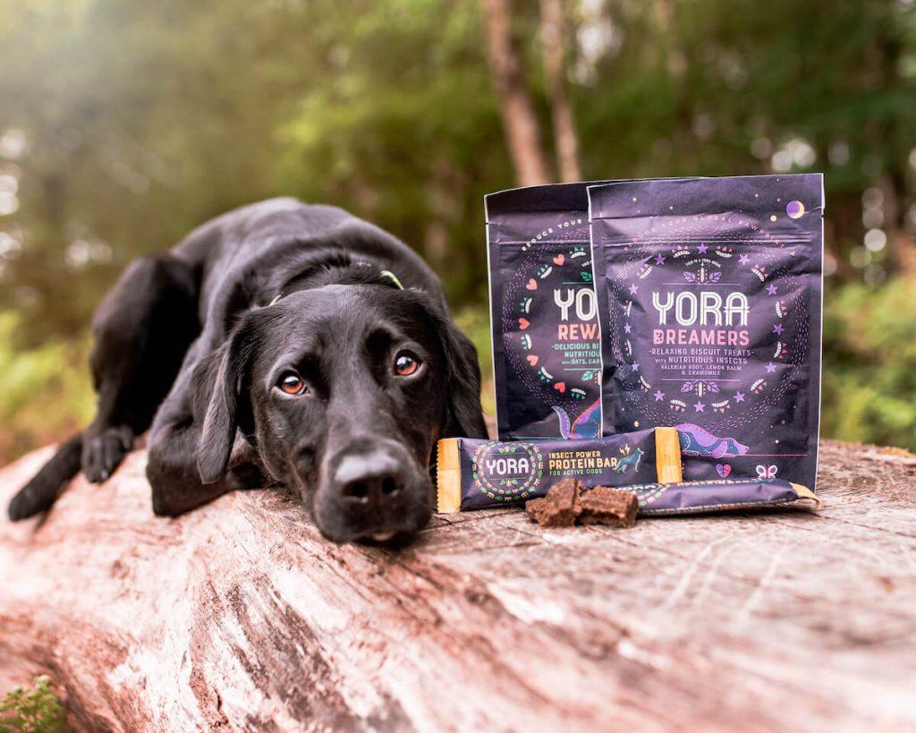 Yora pet food next to a dog